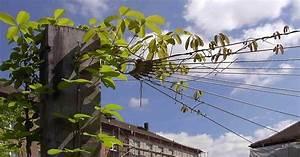Kletterpflanzen Für Pergola : berdachungen mit kletterpflanzen ~ Markanthonyermac.com Haus und Dekorationen