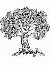 Coloring Tree Adult Pages Printable Adults Mycoloring Books Recommended sketch template