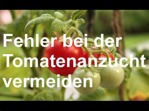 Fehler Vermeiden Beim Fenstereinbau by H 228 Ufige Fehler Beim Tomatenanbau Vermeiden