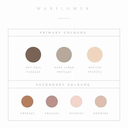 Colour Palette Palettes Create Neutral Aesthetic Colors