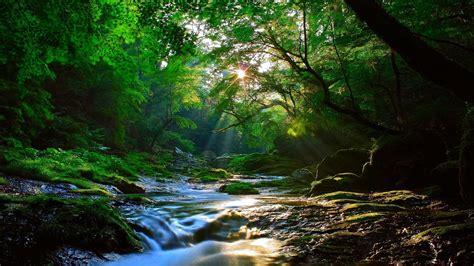 Beautiful Sunlight At Forest Wallpaper 2560x1600 ...