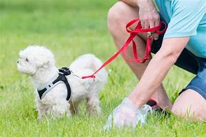 eXamining Dog Poop and Raw Feeding | Keep the Tail Wagging