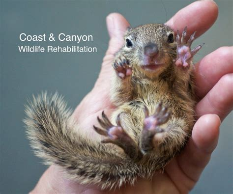 coast canyon wildlife rehabilitation by kim barker