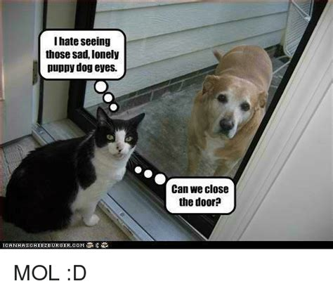 Puppy Dog Eyes Meme - i hate seeing those sad lonely puppy dog eyes can we close the door mol d meme on me me