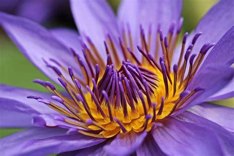 รูปภาพฟรี: สวน, ธรรมชาติ, น้ำ, ฤดูร้อน, ดอกไม้, โลตัส