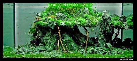 Oliver Knott Aquascaping - aquascape by oliver knott aquascaping