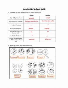 Genetics Test 1 Study Guide