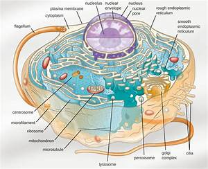 Learning Objectives  Unique Characteristics Of Eukaryotic