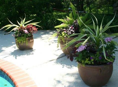 pool plants planting backyard pool landscaping pool