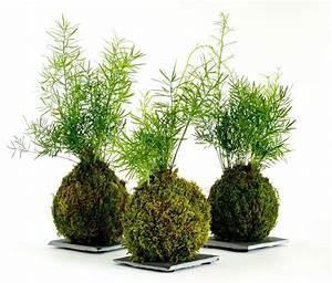Kokedama Selber Machen : how to make a japanese moss ball the art of kokedama ~ Orissabook.com Haus und Dekorationen