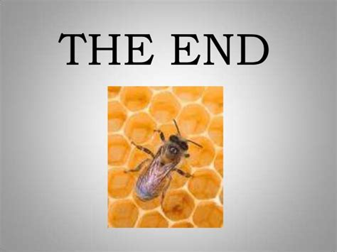 bomb sniffing bees slideshow