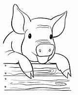 Pig Coloring Pages Printable sketch template
