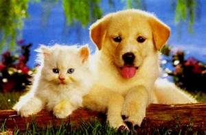 Cute Dogs Pets Puppies And Kittens Together Pictures Hd ...