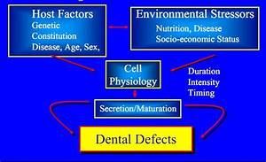 Dentistry Lectures For Mfds  Mjdf  Nbde  Ore  A Note On Tooth
