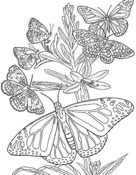 disegni da colorare per adulti farfalle disegni da colorare per adulti foto 5 40 tempo libero