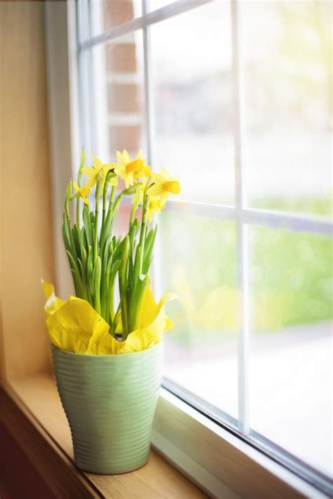 Window Sill Table by Free Images Nature Plant Flower Glass Meal