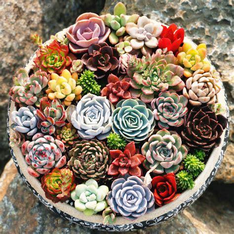 Rare Beautiful Mixed Succulents Seeds, 200pcs/pack ...