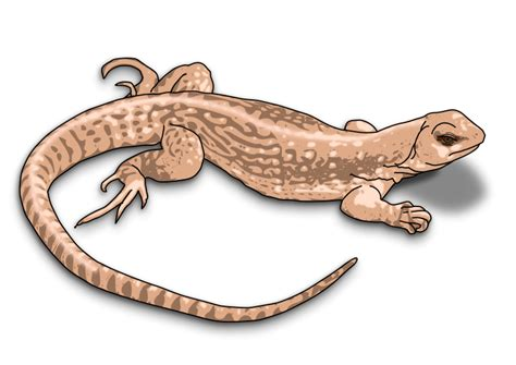 Pencil And In Color Reptile Clipart