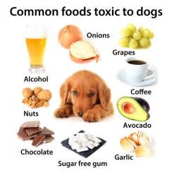what human food can cats eat foods dogs should not eat 10 human foods that are