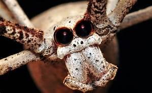 Faire Fuir Les Araignées : araign e 8 yeux voyage de mani re conome ~ Melissatoandfro.com Idées de Décoration
