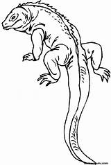 Gecko Coloring Pages Print Cartoon sketch template