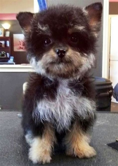 coolest craziest cross breed dogs youll