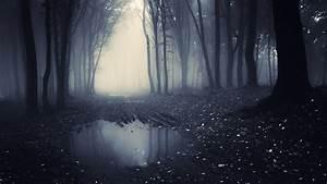 Dark, Forest, Chromebook, Wallpaper