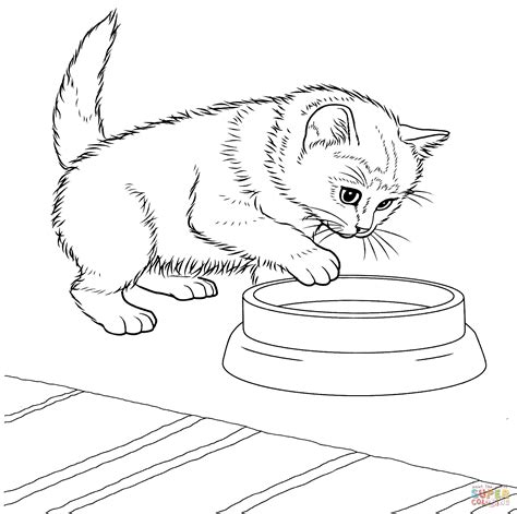 javanese kitten coloring page  printable coloring pages