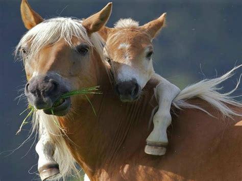 weisst du alles ueber pferde