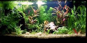 Welche Fische Passen Zusammen Aquarium : s wasser mein erstes aquarium 54l seite 3 ~ Lizthompson.info Haus und Dekorationen