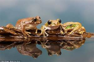Amazing Pictures Of Frogs Clambering Over Each Other On A