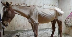 Cruel Owner Starved Horse - And Even Posted Pictures On Social Media