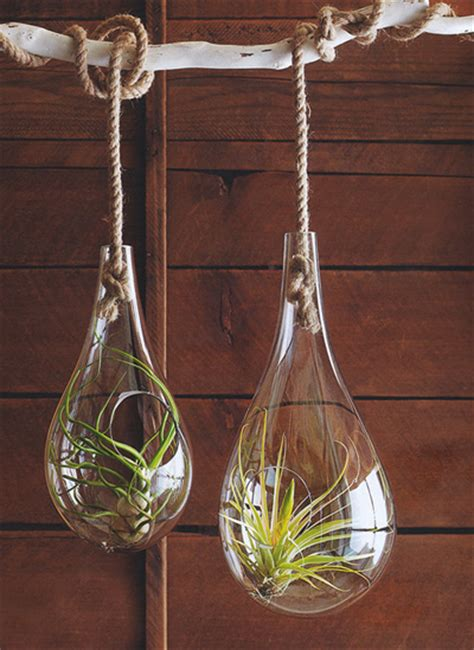 mid century modern air hanging planter  tillandsia air