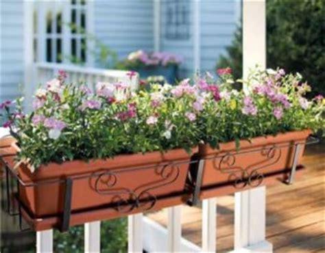 vasi per davanzali aprile la cure delle piante in vaso di balconi e