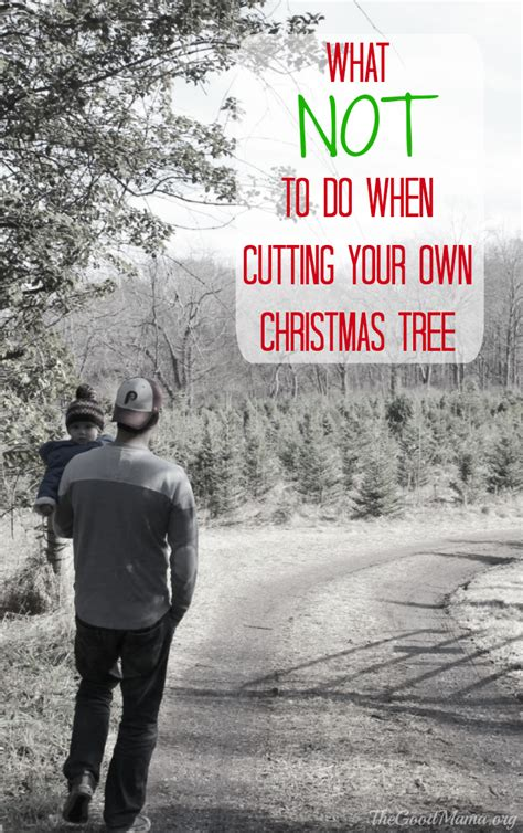 cut your own xmas trees maryland what not to do when cutting your own tree the