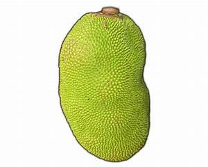 Jackfruit clipart - Clipground