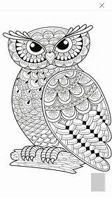 Coloring Pages Owls Owl Adult Print Easy Trending Days Last Drawing Children Xxxtentacion sketch template