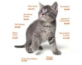 how to get a cat to like you cat insurance trusted coverage for 40 years petplan