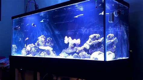 210 Gallon Aquarium Up And Running Youtube