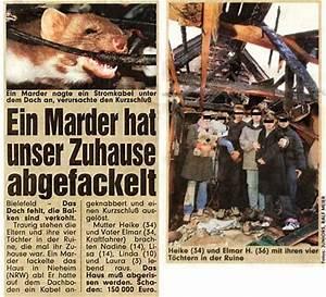 Marder Auf Dachboden : marder marderschutz marderabwehr marderschreck marderfalle ~ Articles-book.com Haus und Dekorationen