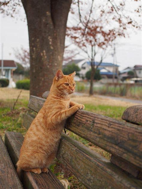 Cute Ginger Cat On Park Bench Luvbat