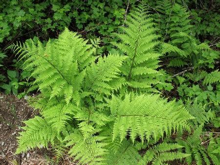 medicinal plants   benefits alternative medicine