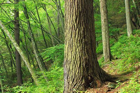 picture wood nature tree leaf landscape bark