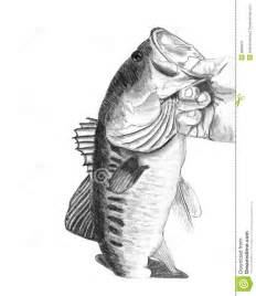 Bass Fish Drawings