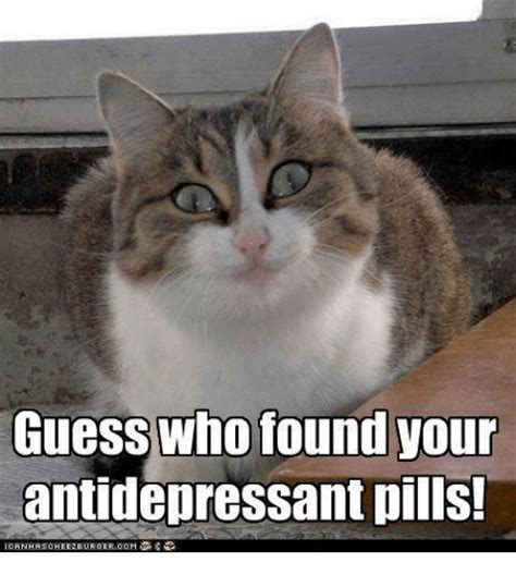 Antidepressant Meme - guess who found your antidepressant pills guess meme on sizzle