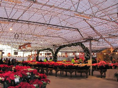als garden center kicks  christmas  evening