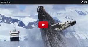 Video Of The Week Tremendous Number Of Whales In Antarctica
