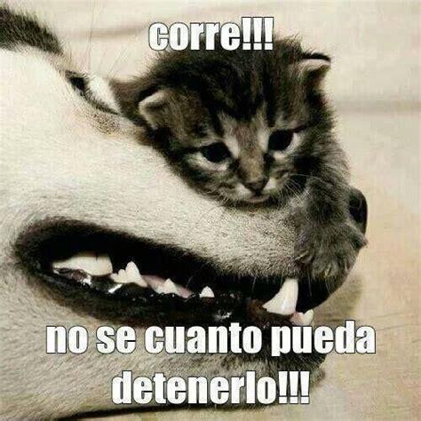gatitos graciosos buscar con memes animales
