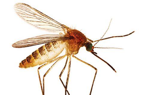 images for mosquito mejores insecticidas elimina los mosquitos este verano beevoz