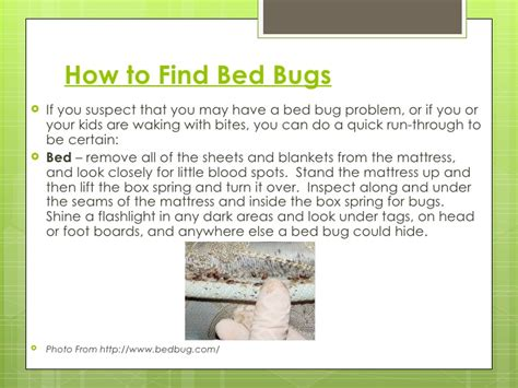 do bed bugs come out when the lights are on the truth about bed bugs
